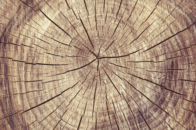 Kmen stromu - leta